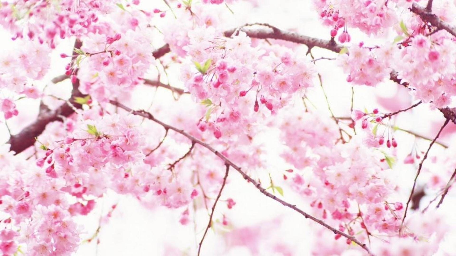 ebdebf3dffadde-flowers-for-you-green-garden-wallpaper-wp3605308