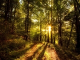 fdcbebecbdfa-forest-photography-hdr-photography-wallpaper-wp3605514