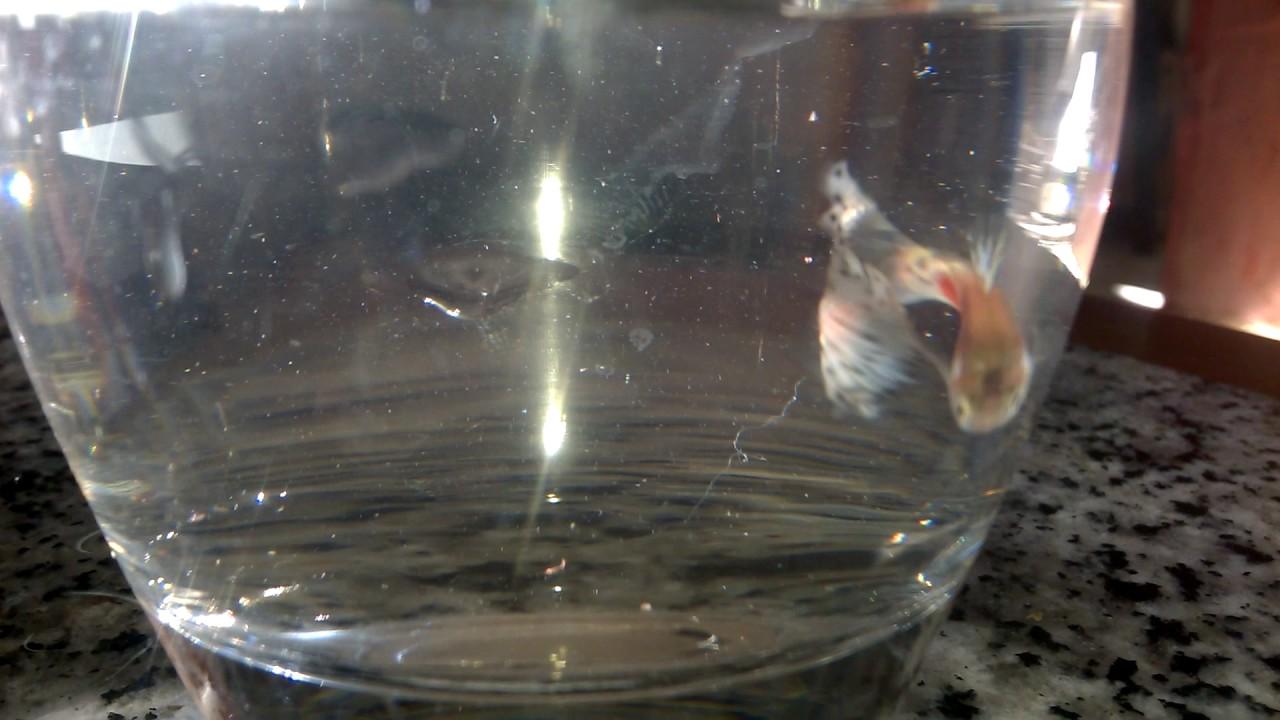 fish-tank-howto-make-design-aquarium-FHD-1080P-NEW-Freshwater-Setup-Disease-Breed-wallpaper-wpc580120