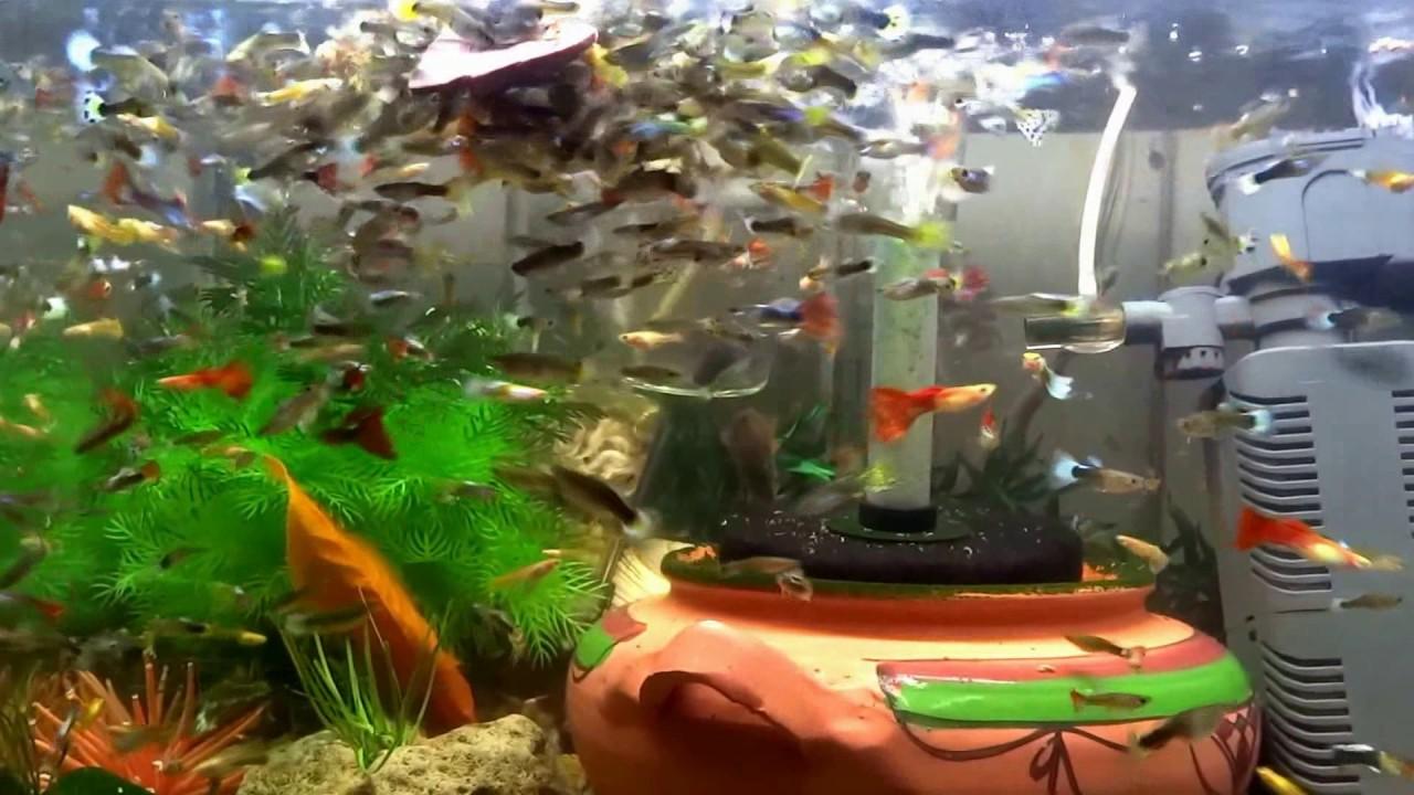 fish-tank-howto-make-design-aquarium-FHD-1080P-NEW-Freshwater-Setup-Disease-Breed-wallpaper-wpc580381