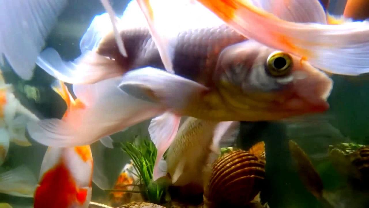 fish-tank-howto-make-design-aquarium-FHD-1080P-NEW-Freshwater-Setup-Disease-Breed-wallpaper-wpc580387