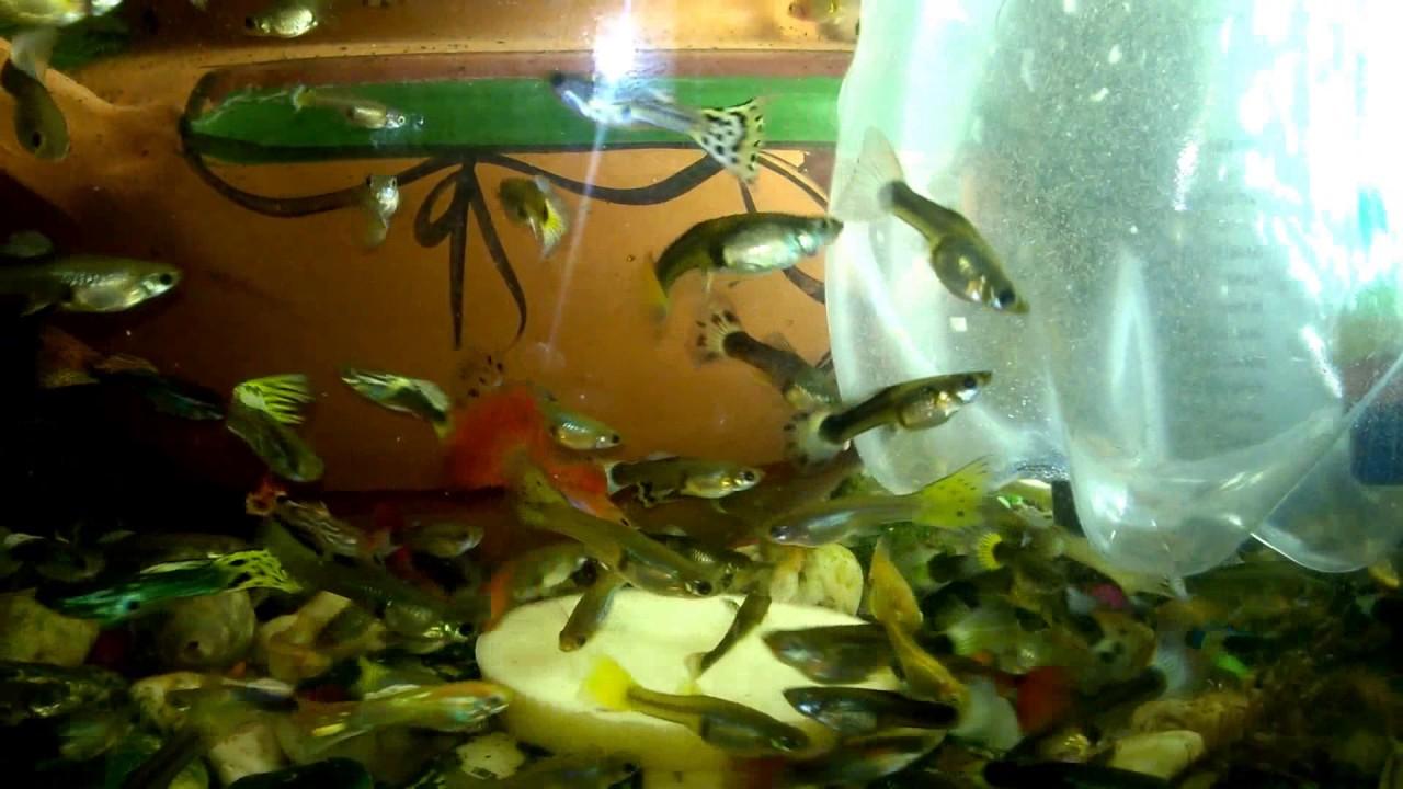 fish-tank-howto-make-design-aquarium-FHD-1080P-NEW-Freshwater-Setup-Disease-Breed-wallpaper-wpc580397