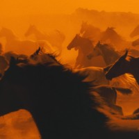 galloping-herd-1920x1080-wallpaper-wp3805778