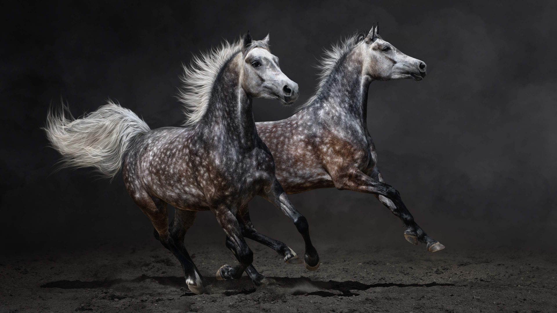 gray-horse-galloping-uhd-1920x1080-1920%C3%971080-wallpaper-wp3806053