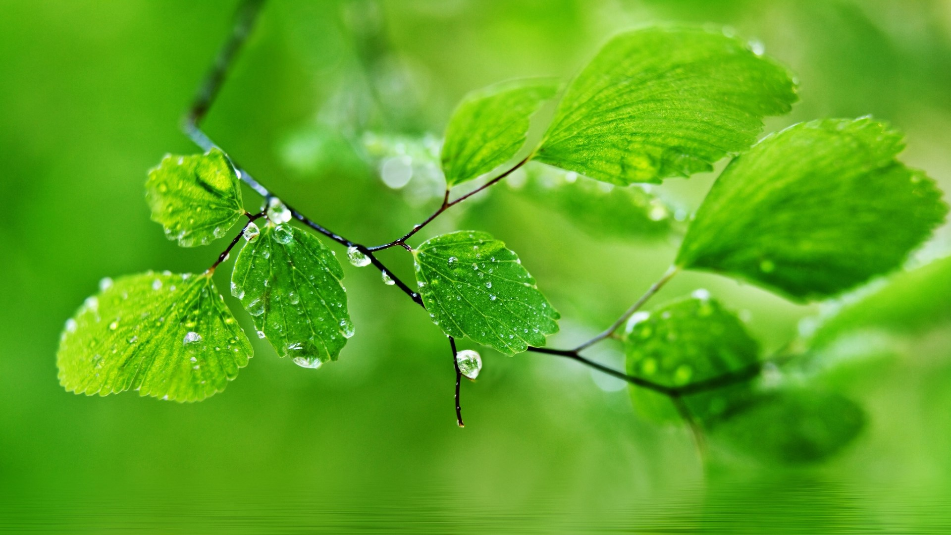 green-leaf-nature-rain-hd-pictures-wallpaper-wpc5805571