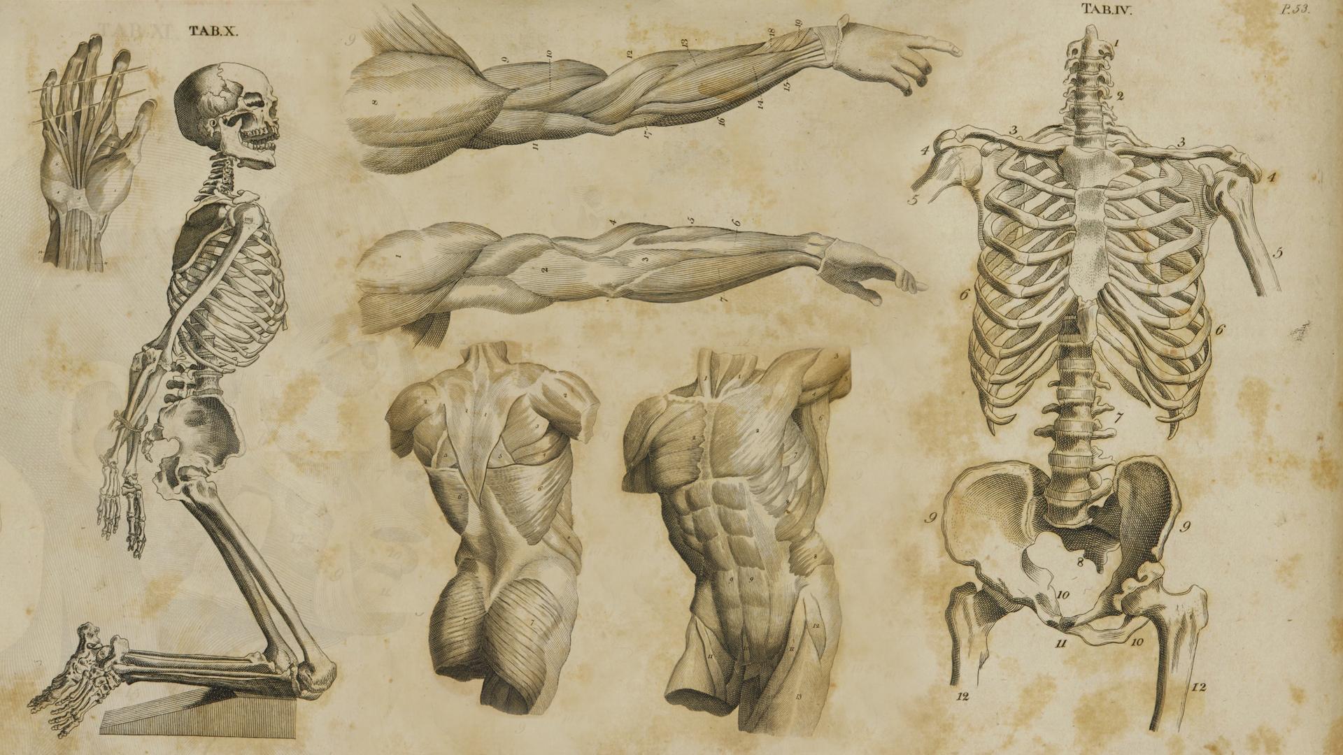 s-Anatomy-by-JasonMonteCarlo-deviantart-com-on-deviantART-wallpaper-wpc920560