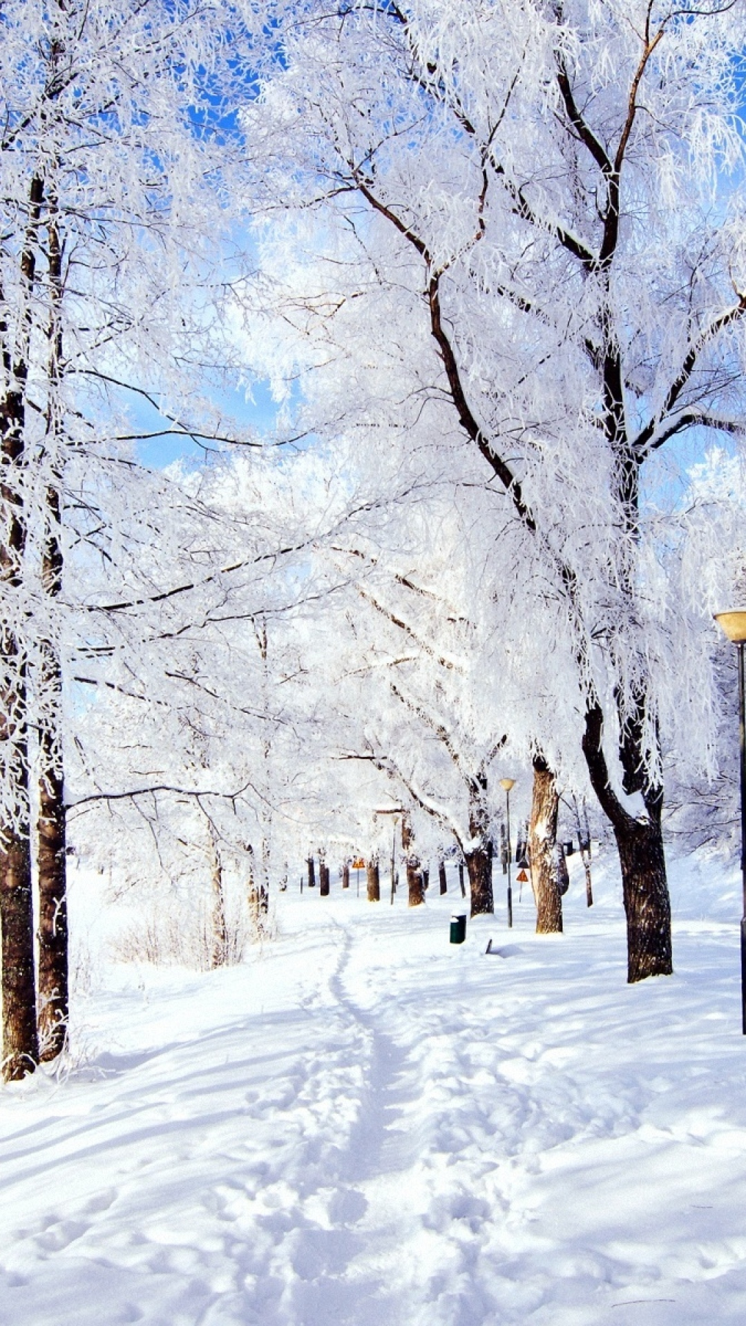 trail-trees-snow-frost-day-winter-wallpaper-wpc90010055