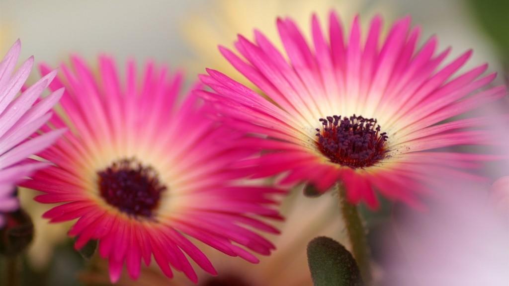 Desktop-HD-Flower-Wallpaper-Macro_pink_orchid-_HD_Flowers_Photography_1366x768-1024x576