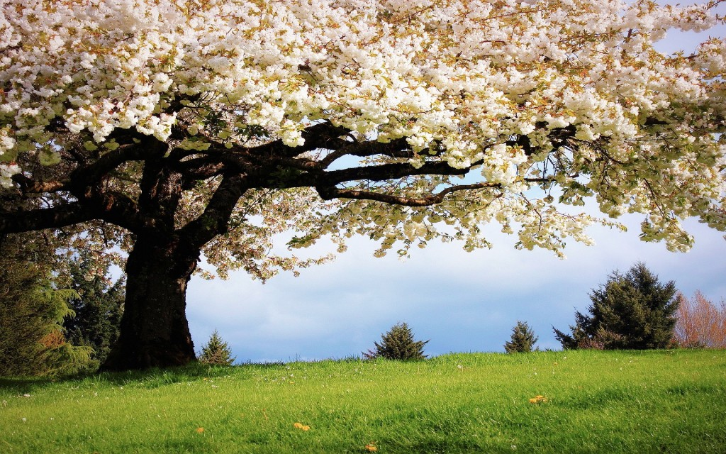 Spring-wallpapers4-1024x640