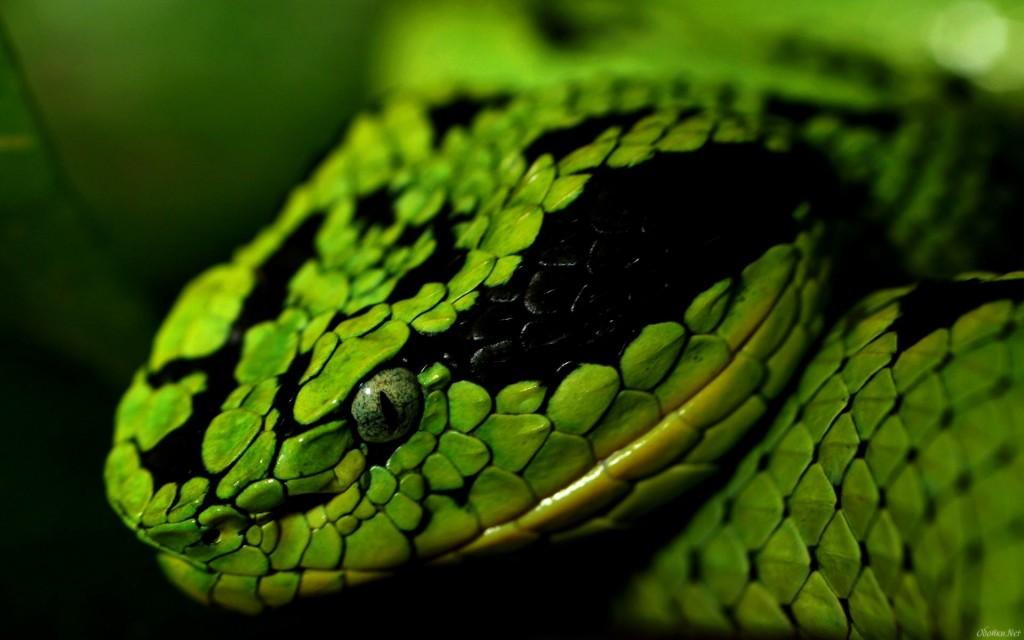 green-snake-1024x640