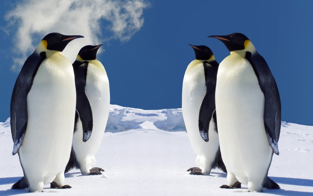 penguin-wallpaper1-1024x640