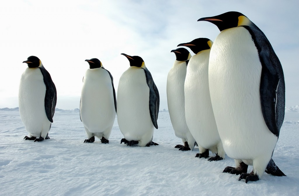 penguin-wallpaper10-1024x670
