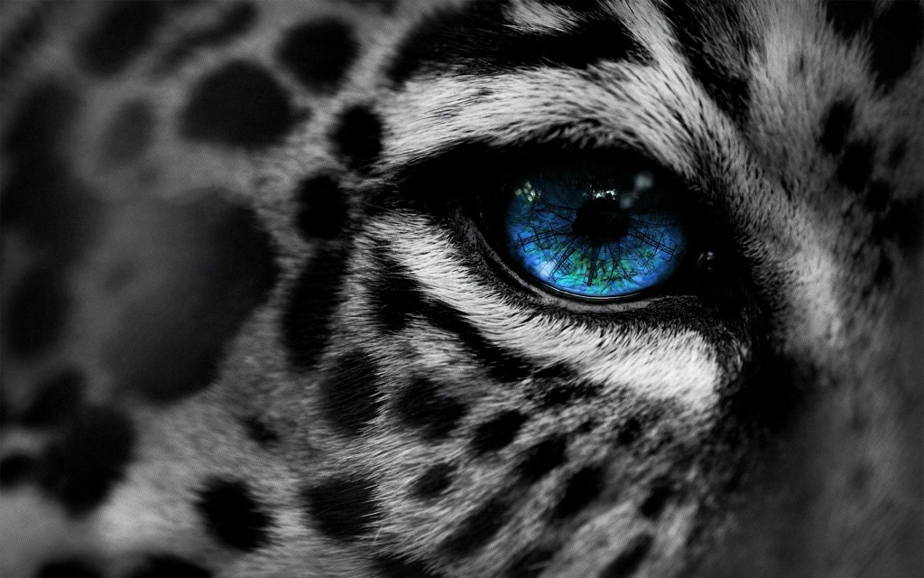 snow-leopard-wallpaper3-1024x640