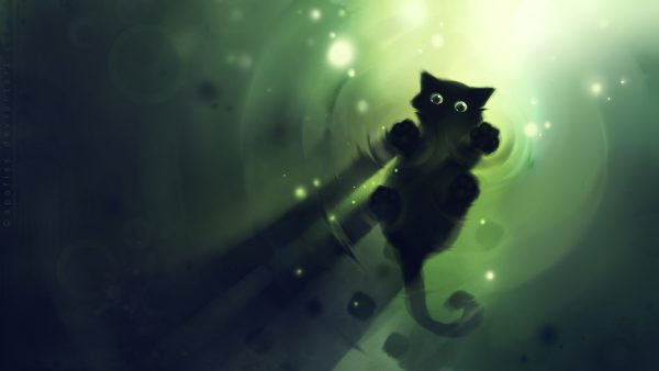 black-cat-wallpaper-HD1-600x338