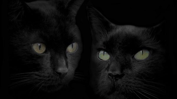 black-cat-wallpaper-HD9-600x338