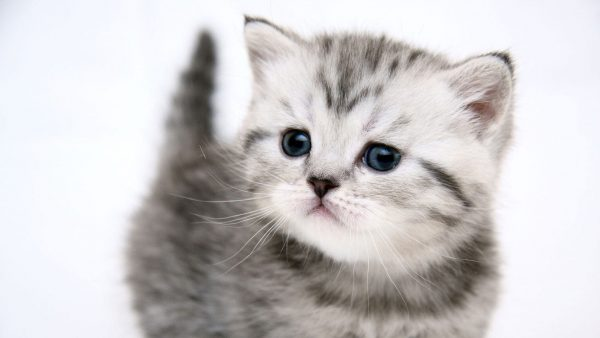 cat-wallpaper-hd-HD9-600x338