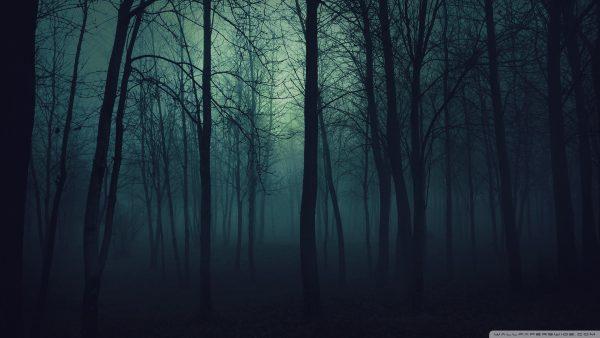 dark-forest-wallpaper-HD1-600x338