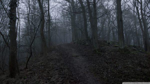 dark-forest-wallpaper-HD8-600x338