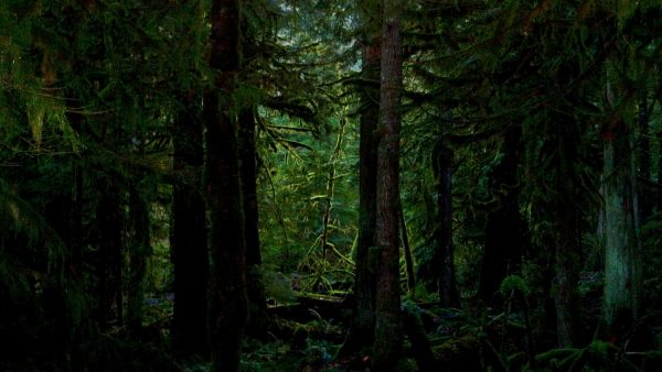 dark-forest-wallpaper-HD9-600x338