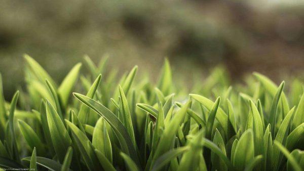 grasscloth-wallpaper-discount-HD5-600x338