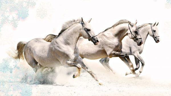 horse-wallpapers-HD10-600x338