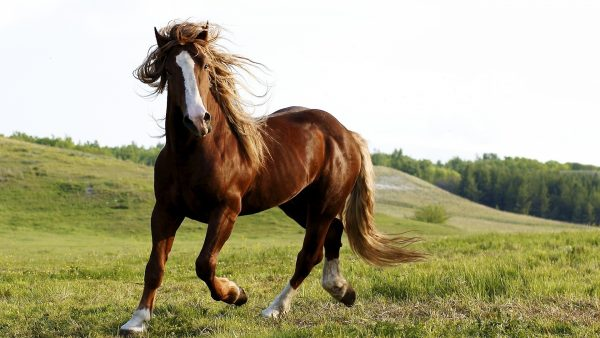 horse-wallpapers-HD2-600x338