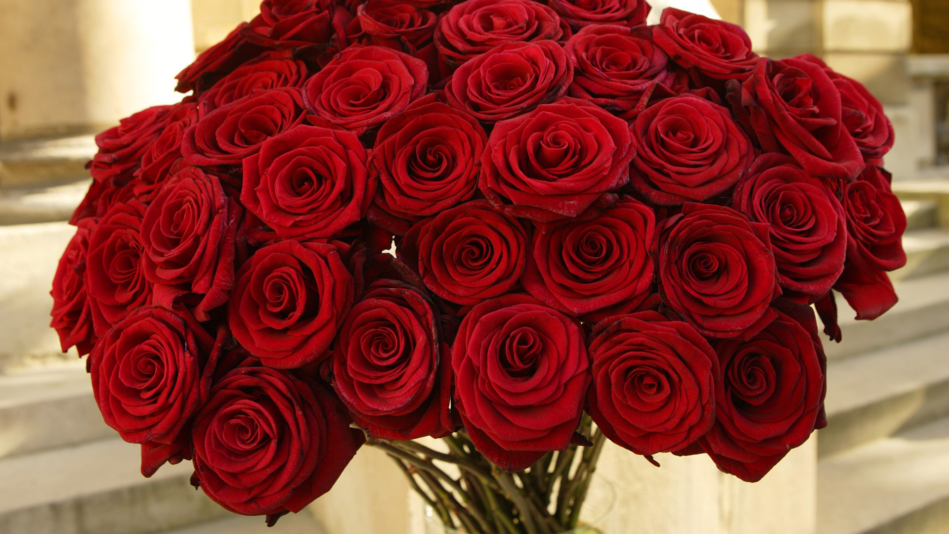 Red roses wallpaper hd - Images of red roses hd ...