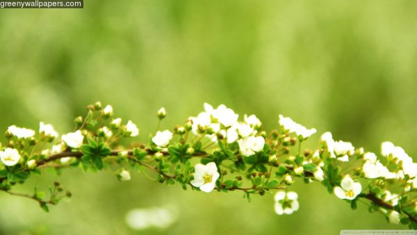 spring-desktop-wallpaper-HD1-600x338