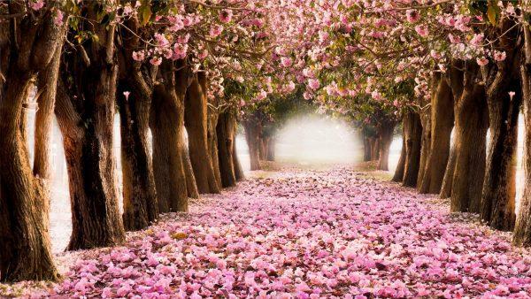 spring-desktop-wallpaper-HD3-600x338