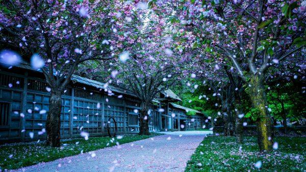 spring-desktop-wallpaper-HD6-600x338
