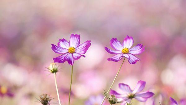wallpaper-floral-HD2-600x338