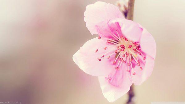 wallpaper-floral-HD4-600x338