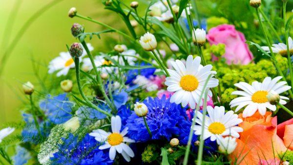wallpaper-floral-HD7-600x338
