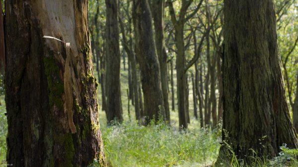woodland-wallpaper-HD10-600x338