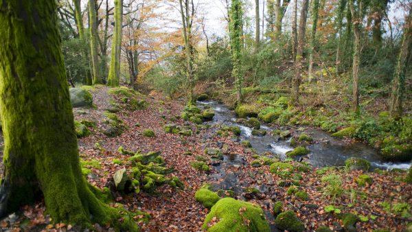 woodland-wallpaper-HD3-600x338