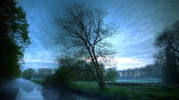 woodland-wallpaper-HD7-600x338