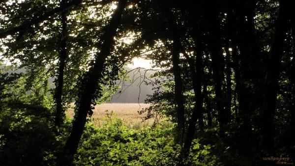 woodland-wallpaper-HD8-600x338