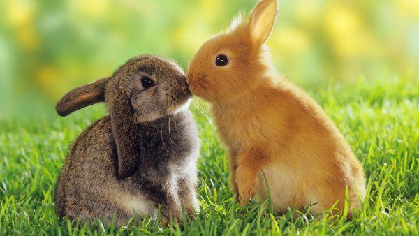 bunny-wallpaper3-600x338