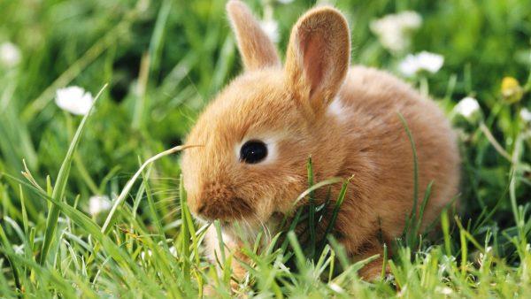 bunny-wallpaper6-600x338