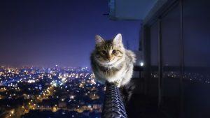 kucing kertas dinding