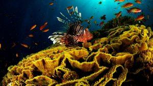 coral wallpaper
