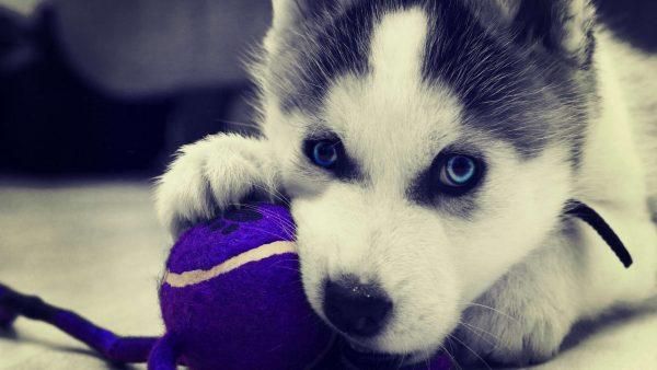 cute-puppy-wallpaper-HD6-600x338