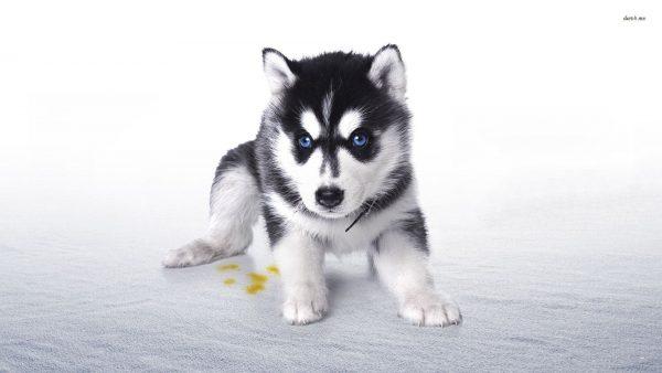 cute-puppy-wallpaper-HD9-600x338