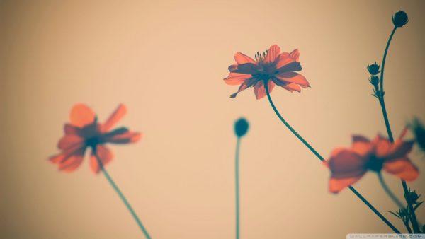 cute-wallpaper-tumblr6-600x338