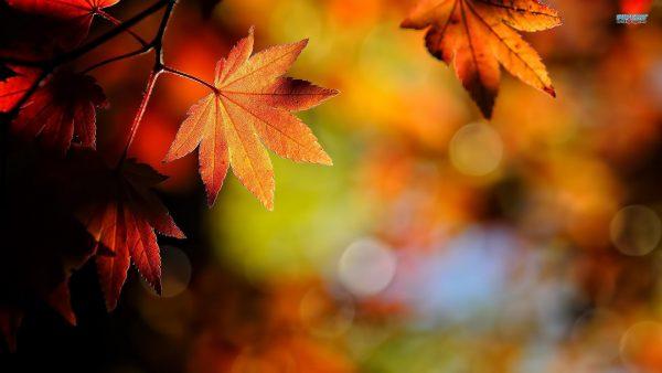 fall-leaves-wallpaper10-600x338