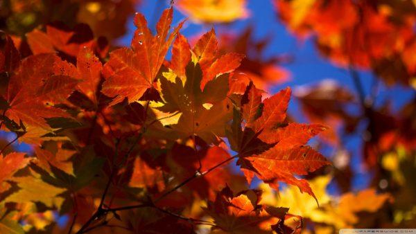 fall-leaves-wallpaper2-600x338