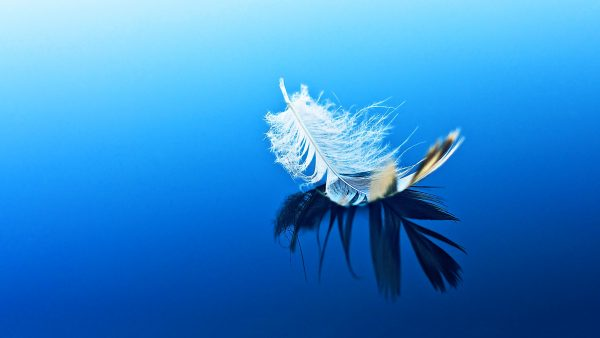 feather-wallpaper2-600x338