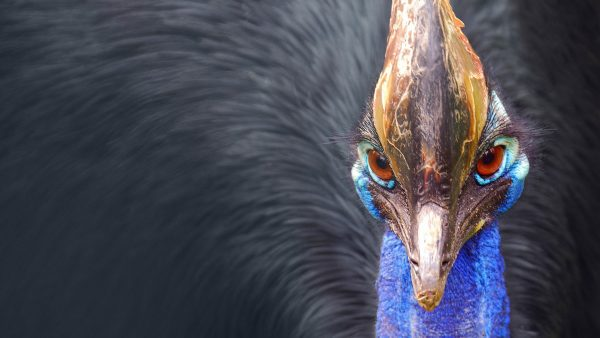 feather-wallpaper9-600x338