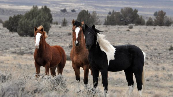 horse-wallpapers7-600x338