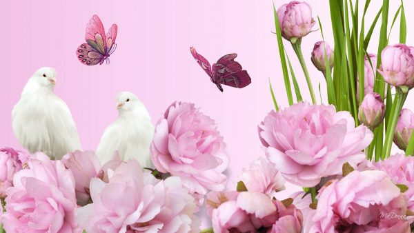 peonies-wallpaper-HD10-600x338